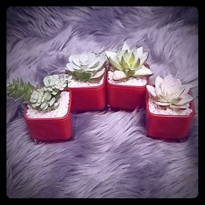 (4) Artificial Potted Succulents with Glitter